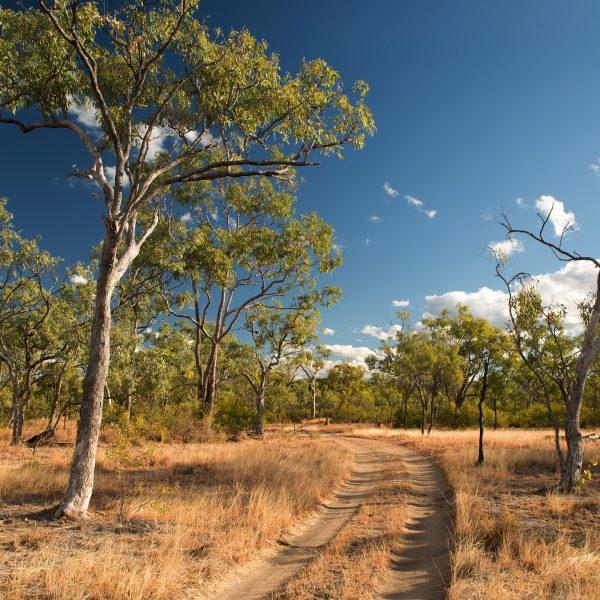 tree in rural Australia